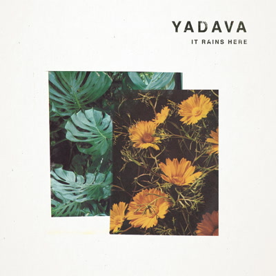 Yadava/IT RAINS HERE LP