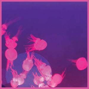 "Mall Grab & Nite Fleit/MOOGIE EP 12"""