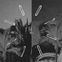 Bato Bato/BATO BATO LP
