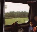 Alexander's Dark Band/DOBUTSU BANCHO CD