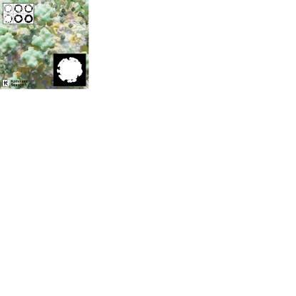 """Various/KOMMERZ SEASON 1: ANTI VIRUS 12"""""""