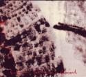 Kuniyuki/REMIXED CD