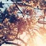 Kiyoko/SEA OF TREES CD